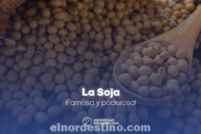 El consumo de 25 gramos diarios de proteína de soja proporciona beneficios cardiovasculares según Universidad Sudamericana