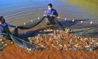 Itaipu ya produjo más de 21 millones de peces en Estación de Acuicultura