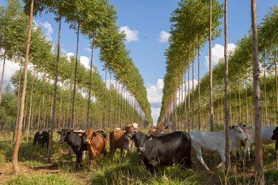 Infona promueve la producción forestal sostenible en el Paraguay