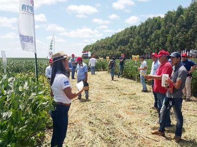 Brasil autoriza cultivo de soja paraguaya