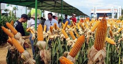 """La Nación / Uruguay, un mercado """"interesante"""" para el maíz paraguayo"""