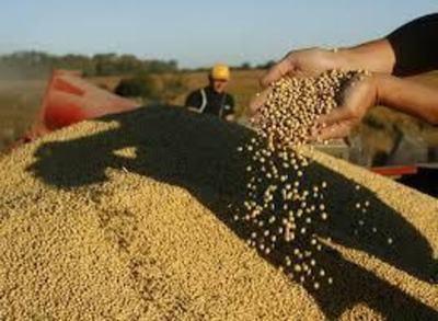 Brasil: Autorizan exportación y comercialización de soja paraguaya