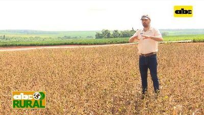ABC Rural: Variedades Monsoy en jornada de campo en Copronar