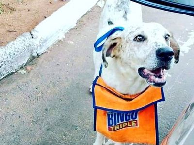Furor en redes: El perro que ayuda a su dueño a vender cartones de bingo