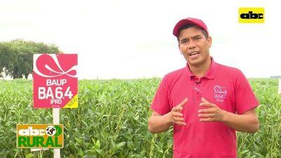 ABC Rural: En Pirapó mostraron variedades de Baup