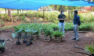 Municipalidad de CDE recibe importante donación de plantines – Diario TNPRESS