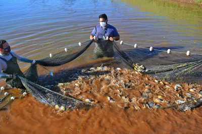 En 20 años, la Itaipu lleva producidos más de 21 millones de peces nativos