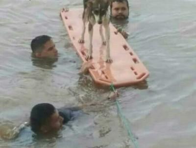 Bomberos fueron los héroes del diluvio