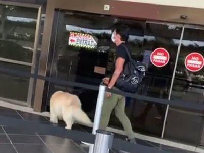 El León llevó al perro y se fue para  Alemania