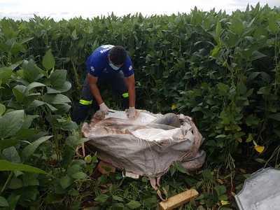 Asesinan a balazos a agricultor brasileño y arrojan su cuerpo en plantación de soja
