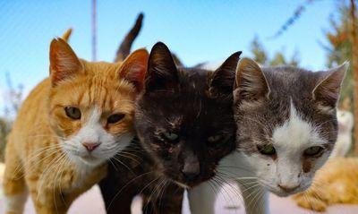 Con la pandemia, se multiplican los abandonos de gatos