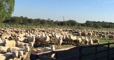 La Nación / Celebran posibilidad de incursionar en el mercado de Catar con carne ovina paraguaya