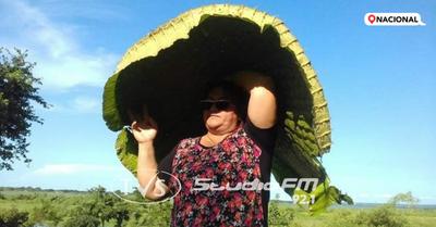 Reaparece el Yacaré yrupẽ y señora del meme pide no usar su imagen en redes