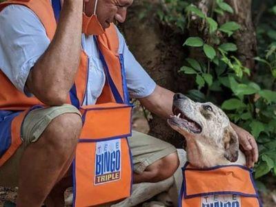 Llenan de regalos a Indio, el perro binguero
