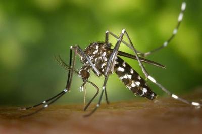 Concepción registra primer paciente con cuadro combinado de dengue y covid