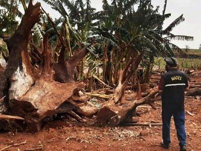 Mades rechaza recurso de firma ganadera por delitos en Canindeyú