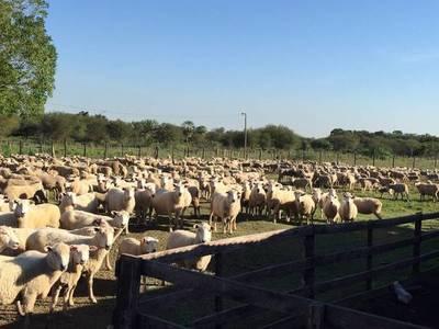 Celebran posibilidad de incursionar en el mercado de Catar con carne ovina paraguaya