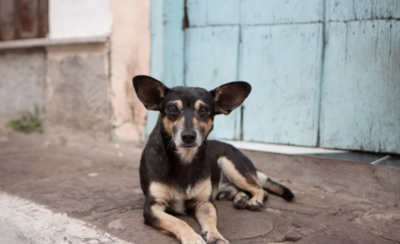 HOY / Imputan a mujer que deja sin agua y comida a su perro hasta morir
