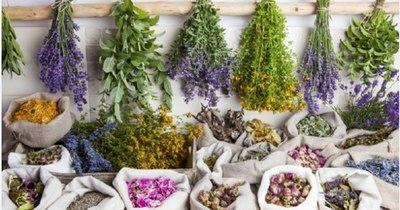 La Nación / Beneficios y propiedades de algunas hierbas medicinales