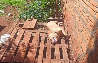 Imputan a mujer que dejó atado a su perro sin agua ni comida hasta morir