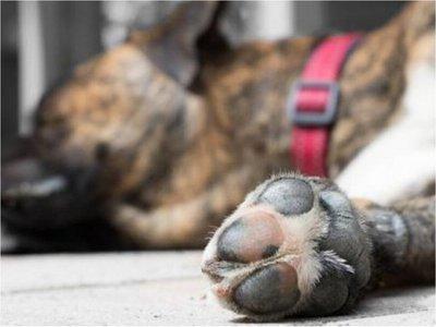 Imputan a una mujer por abandonar a su perro sin agua y comida