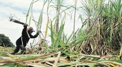 Cañicultores de Caaguazú iniciaron el año con buenas perspectivas