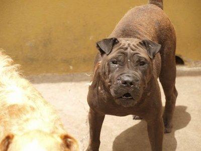 ¡Imputada por dejar morir a su perro atado, sin agua y sin comida!