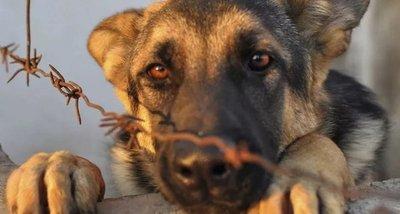 Comuna esteña advierte sobre multas por maltrato a animales
