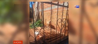 Imputada por abandonar a su perro sin agua ni comida hasta que murió