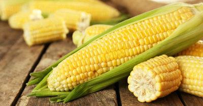 Se retoman envíos de maíz a Colombia luego de 7 años