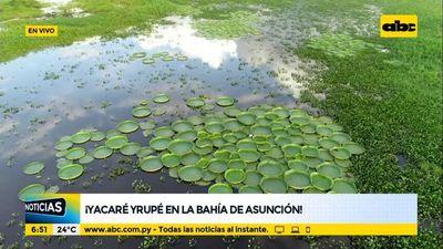 ¡Aparece el Yacaré Yrupé en la Bahía de Asunción!