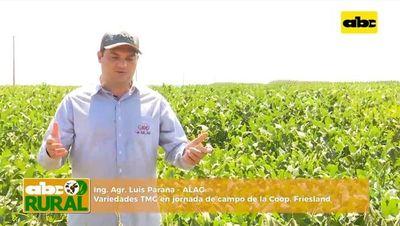 ABC Rural: ALAG y sus variedades TMG en Friesland