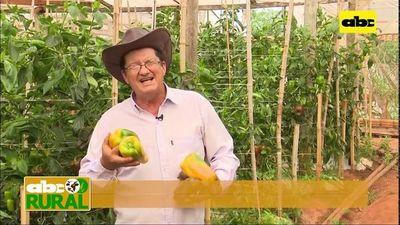 ABC Rural: Productor hortícola habla de cuanto creció con el uso de tecnología