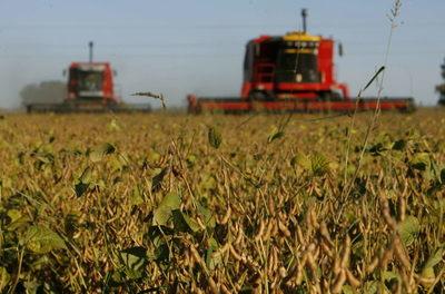 El volumen de exportaciones de granos de Argentina bajó 6 % en 2020