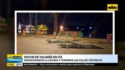 "Yacarés ""invadieron"" las calles de Itá"