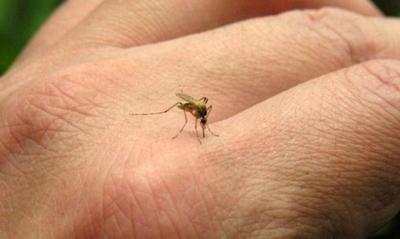 HOY / Confirman 30 casos de dengue y más de 400 notificaciones por semana