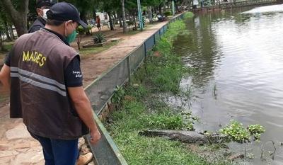 HOY / Intervienen la Municipalidad de Itá por fuga de yakarés