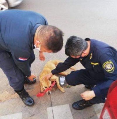Comisario recoge jagua'i y michis enfermos, golpeados, accidentados y abandonados