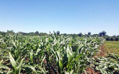 Bonanza para el agro en zonas de Misiones