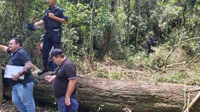 Fiscalía interviene reserva forestal de Yguazú y ordena el cese de la tala de árboles nativos