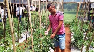Horticultores inician nueva siembra de tomate con sistema invernadero