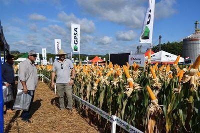 ¿Que elegir para esta zafriña de maíz? Te damos algunas propuestas de Syngenta con su línea NK