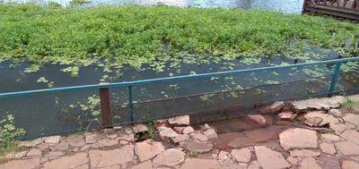 Piden mejoras para revitalizar área de laguna de Itá, zona donde escaparon los yacarés