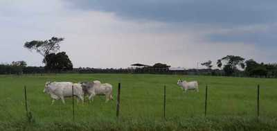 Brasil: expectativa de firmeza para el boi gordo a corto plazo