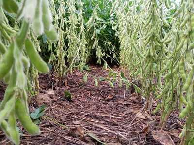 Sistema radicular diversificado evita la erosión del suelo y mejora la producción agrícola