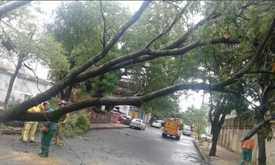 Tierra húmeda y árboles frondosos: peligro creciente para automovilistas, alertan