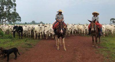 Alertan por escasez de ganado para faena en Mato Grosso