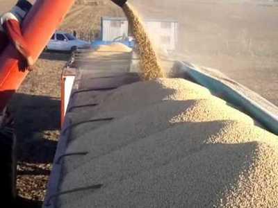 Volumen exportado del complejo soja aumentó 8,2%