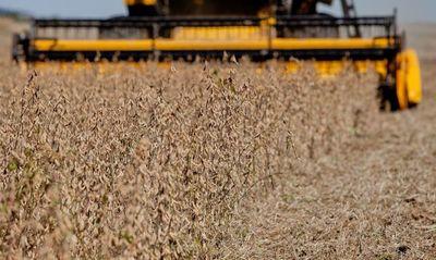La soja sube en Chicago y vuelve a cotizar por encima de los US$ 500 por tonelada