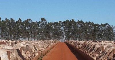 La Nación / Los frigoríficos brasileños urgen importar ganado desde Paraguay